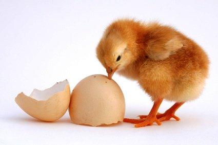L'œuf et la poule entrepreneuriale